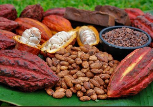 Fruto y semilla del cacao