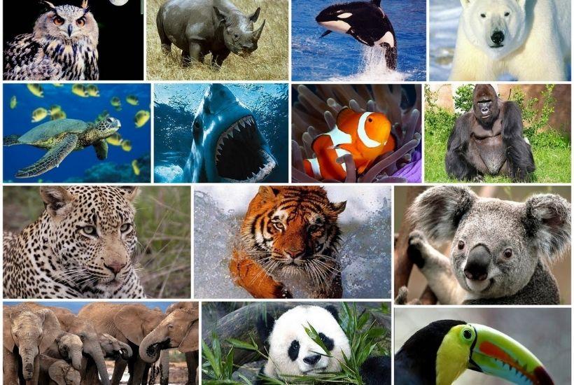 Especie animal